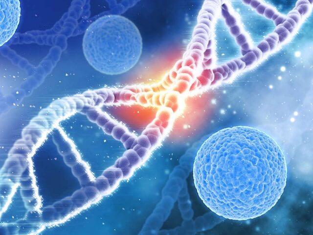 Tế bào gốc có thể được sử dụng để thay thế mô sụn bị mất hoặc tổn thương ở khớp.